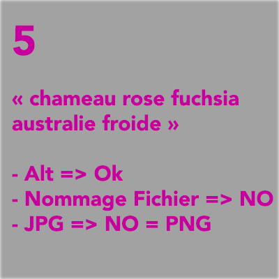 chameau-rose-fuschia-australie-froide